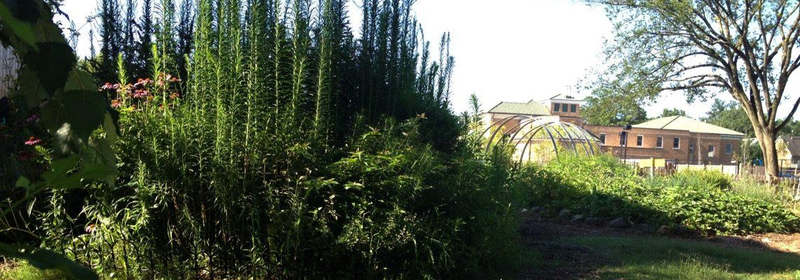 Janney Garden